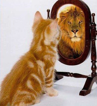 cat-mirror-lion