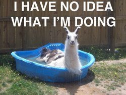 llama in pool